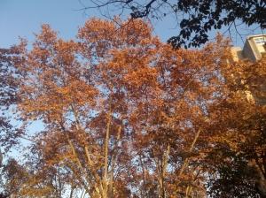 arbre barri